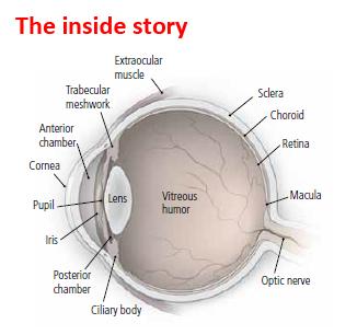 Seeing flashing light corner of eye