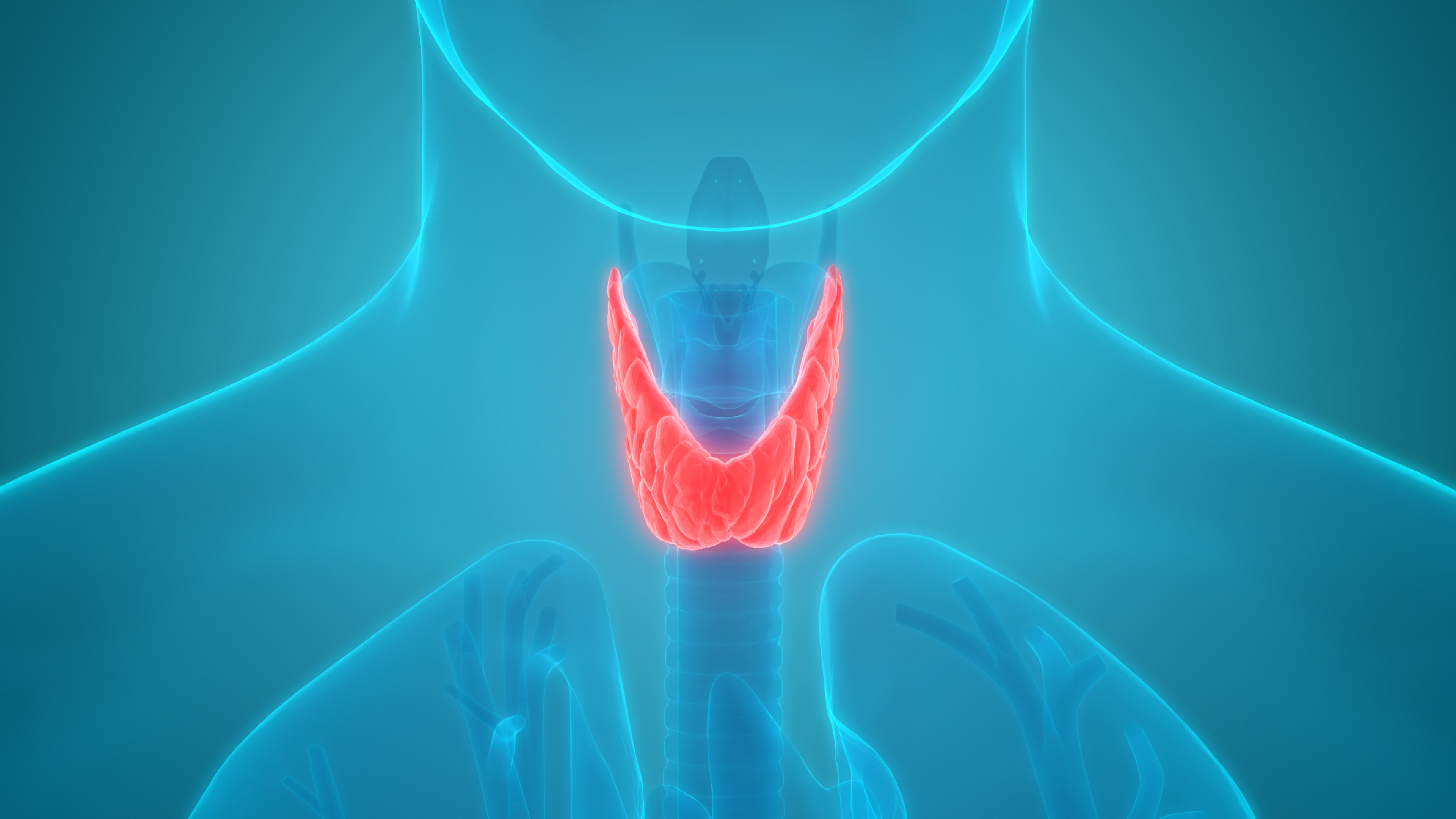 3D illustration of thyroid gland