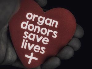 การแจ้งเตือนถึงความสำคัญของการบริจาคโลหิตและอวัยวะ  มือจับหัวใจพร้อมข้อความว่า: ผู้บริจาคอวัยวะช่วยชีวิต